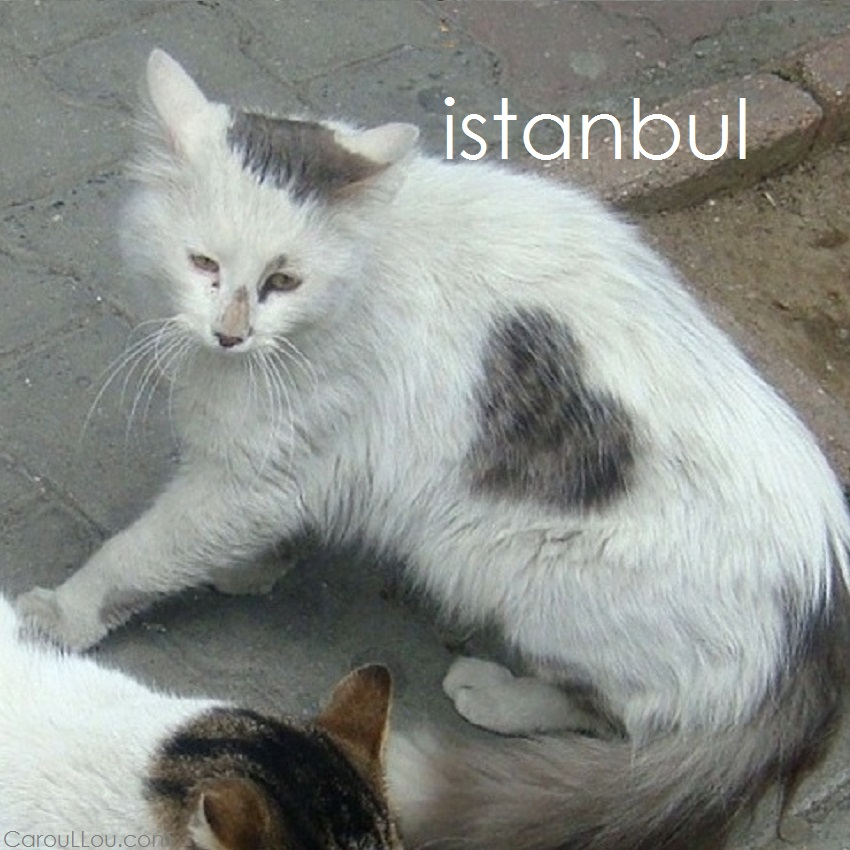 CarouLLou.com Carou LLou in Istanbul Turkey cat Hearts collection+-
