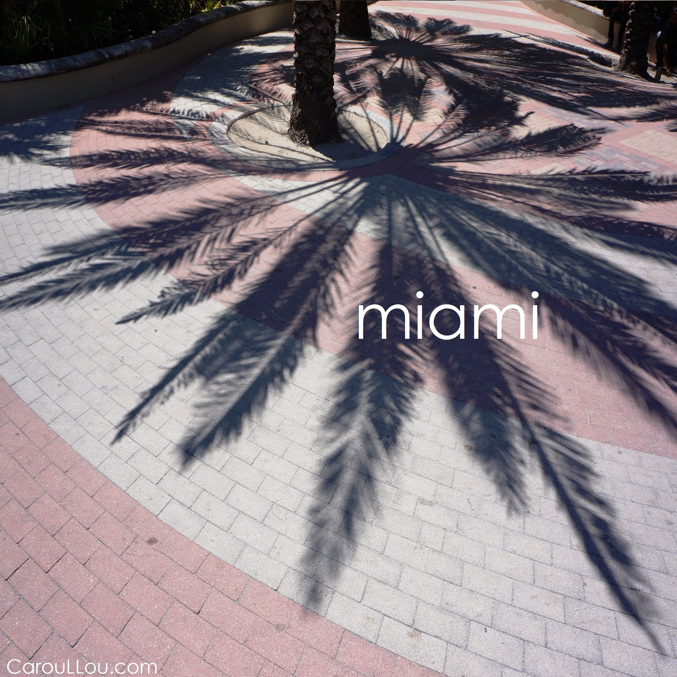 CarouLLou.com Carou LLou in Miami South Beach palm shadow +-
