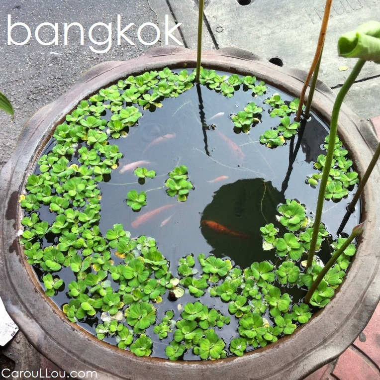 CarouLLou.com CarouLLou in Bangkok Thailand red fish t+-